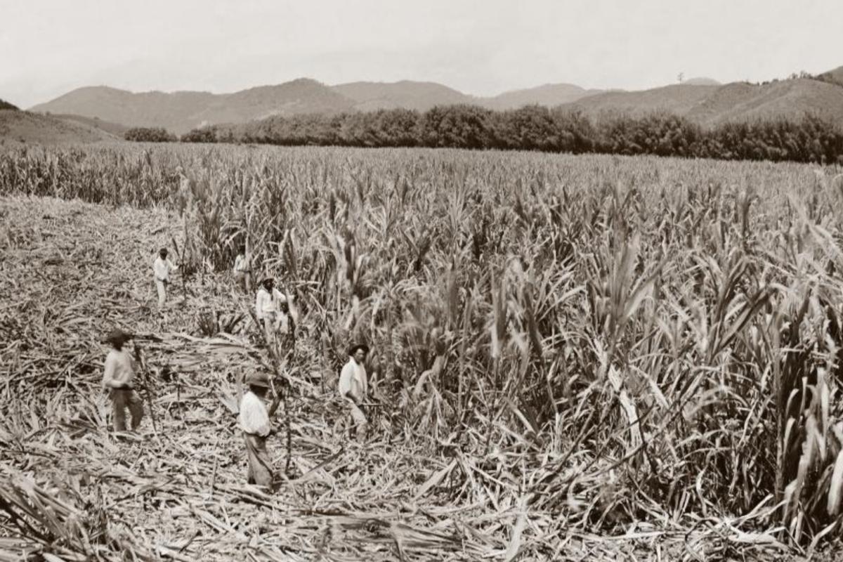 Da abolição ao capitalismo – no Brasil e nos EUA